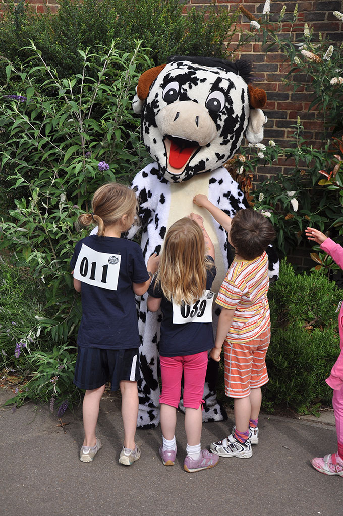 G&D cow mascot