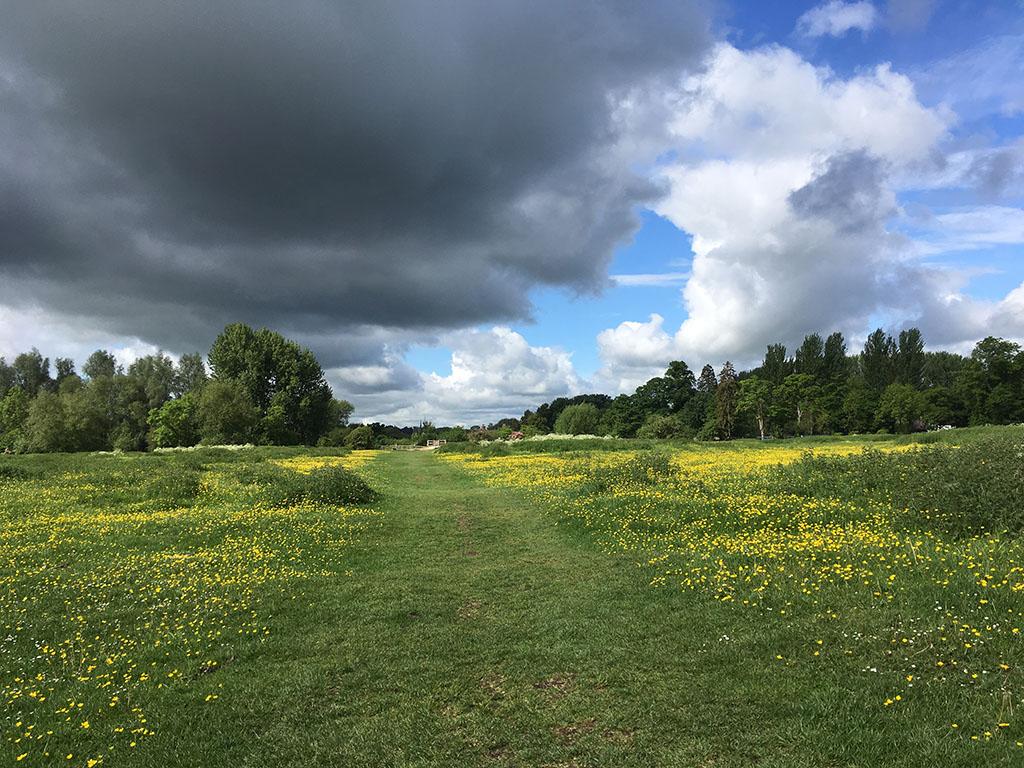 Run Jericho route in Port Meadow